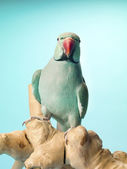 Front view of a parrot standing on a wooden log — Stock Photo
