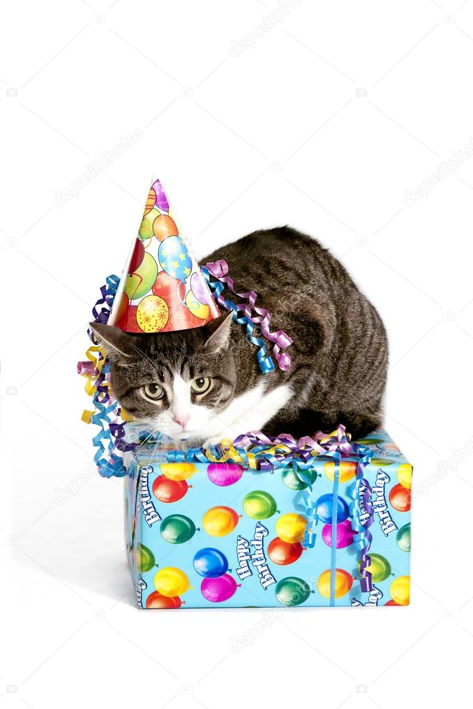 Cat wearing a birthday hat on top of a present on a white background. — Stock Photo #14080727