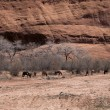 Stock Photo: Group of animals with bare trees and cliff in background