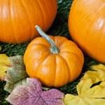 Overhead view of halloween pumpkins — Stock Photo