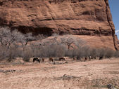 Group of animals with bare trees and cliff in background — Stock Photo