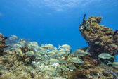 Group of fish on coral reef colonies — Stock Photo