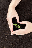 Hands protecting tree growth — Stock Photo