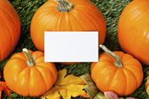 View of halloween pumpkins with placard — Stock fotografie