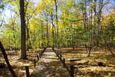 Pasarela y árboles de otoño — Foto de Stock