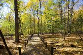 Sonbahar ağaçlar ve yürüme yolu — Stok fotoğraf