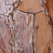 Metallic bark texture - Stock Photo