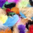 Dyed bird feather - Stock Photo