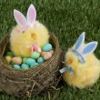 Stock Photo: Easter bunny hatching her eggs