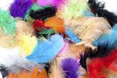 Dyed bird feather — Stock Photo