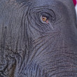 Eye of the elephant — Stock fotografie