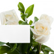 Empty card on white roses - Stockfoto
