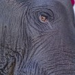 Eye of the elephant — Foto de Stock