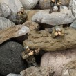 Fighting soldiers on rocks - Stock Photo