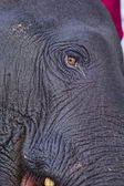 Eye of the elephant — Stock Photo
