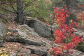 Autumn trees and rock — Stockfoto