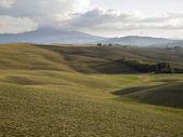 Green hillside in tuscany italy — Stock Photo