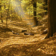 Sunbeam in forest — Foto Stock