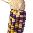 Stock Photo: Indicorn cob