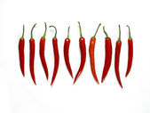 Chili line up — Stock Photo