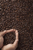 Coffee beans in cupped human hands — Stock Photo