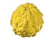διακοσμητικά κίτρινη κολοκύθα — Φωτογραφία Αρχείου