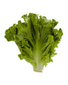 Head Of Lettuce — Stock Photo