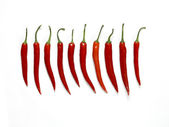 Lined up chilis — Stock Photo