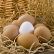 White eggs with brown eggs — Stock Photo