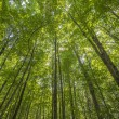 Stock Photo: Forest canopy
