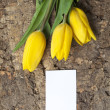 Royalty-Free Stock Photo: Three yellow tulips with white card