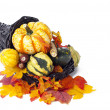 Fall decoration assortment — Stock Photo