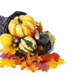 Fall decoration assortment — Stock Photo #18748703