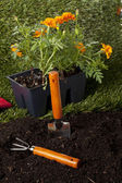 Backyard planting tools — Stock Photo