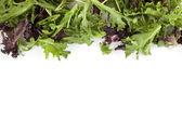 Laitue rouge et vert de brocoli — Photo