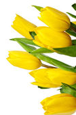 Vertical image of yellow tulips — Stock Photo