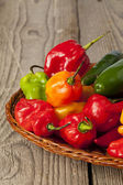 Colorful hot peppers — Stock Photo
