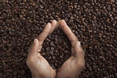 Human hands and coffee beans — Stock Photo