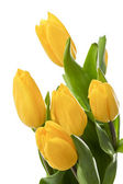 Bouquet of yellow tulips — Stock Photo