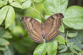 Brown butterfly on plant — Stock Photo