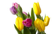 Cropped shot of yellow and pink tulips — Stock Photo