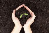 En hand som håller en liten växt — Stockfoto