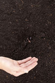 A hand sowing seeds into the soil — Stock Photo