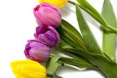 Beyaz renkli lale çiçek — Stok fotoğraf