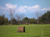 Hay bale in field — Stock Photo