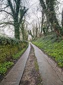 Forest Walkway in Cotswold — Fotografia Stock