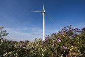 Vista de um arbustos com turbina de vento no fundo — Foto Stock