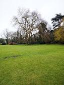 Otwarte pole w Anglii — Zdjęcie stockowe