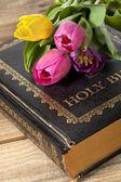 İncil üzerine pembe ve sarı lale — Stok fotoğraf