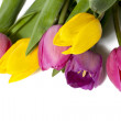 Pretty colorful tulips - Stock Photo